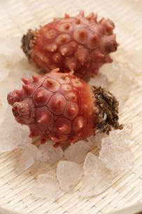 三陸産真海鞘の写真素材 [FYI00061099]