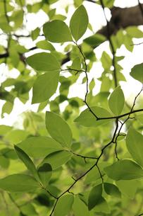 里山の新緑の写真素材 [FYI00061100]