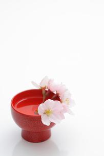 お猪口の桜の写真素材 [FYI00061113]