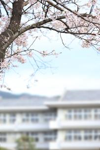 サクラの樹と学舎の写真素材 [FYI00061117]