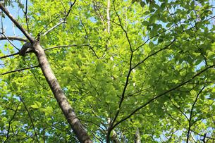 里山の新緑の写真素材 [FYI00061127]