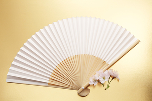 扇子と桜の花の写真素材 [FYI00061129]