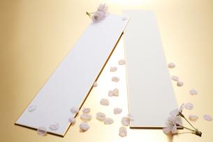 短冊と桜の花の写真素材 [FYI00061136]