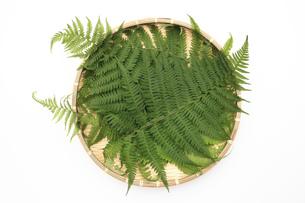 竹ザル上のシダの葉の写真素材 [FYI00061150]