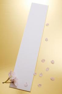 短冊と桜の花の写真素材 [FYI00061151]