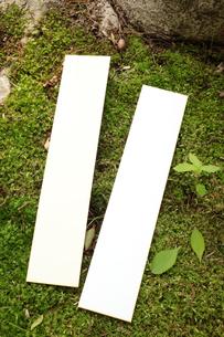 森の中の短冊の写真素材 [FYI00061162]