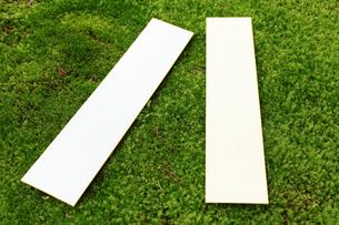 スナゴケの上の短冊の写真素材 [FYI00061182]