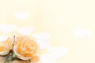 バラのコサージュとハートの写真素材 [FYI00061220]