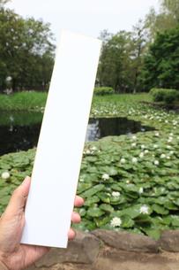 睡蓮の池と短冊の写真素材 [FYI00061227]