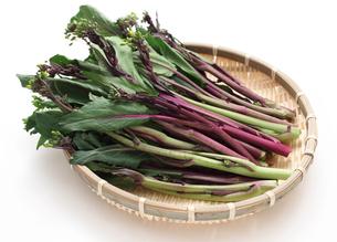 近年人気の中国野菜コウサイタイの写真素材 [FYI00061333]