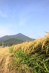 筑波山とコシヒカリの写真素材 [FYI00061371]