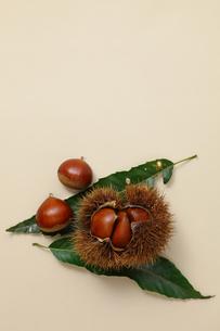 薄茶色のバックで撮ったイガグリの素材 [FYI00061394]