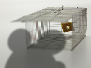 ネズミ捕り器とネズミの影の写真素材 [FYI00061426]