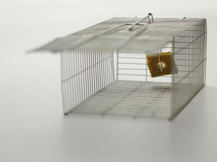 ネズミ捕り器の写真素材 [FYI00061431]
