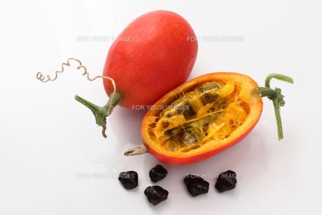 カラス瓜の実と金運の種の写真素材 [FYI00061438]