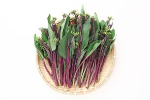 ザルに盛った紅菜苔の写真素材 [FYI00061563]