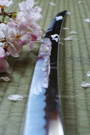 日本刀と桜の写真素材 [FYI00061693]