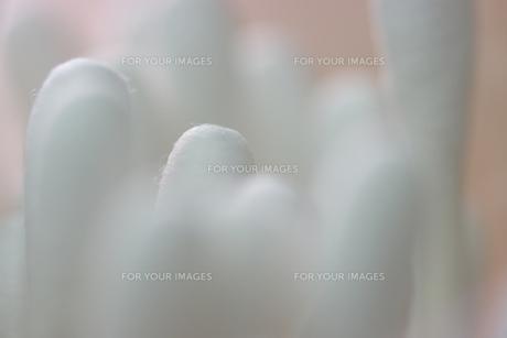 綿棒の素材 [FYI00061731]