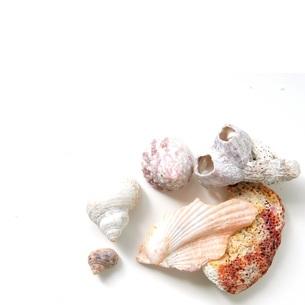 貝殻の写真素材 [FYI00062201]