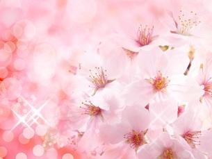 桜の花の写真素材 [FYI00062494]