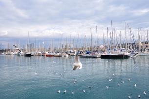 スペイン バルセロナ港の写真素材 [FYI00063010]