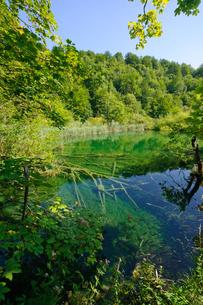 クロアチア 世界自然遺産 プリトヴィツェ湖群国立公園の写真素材 [FYI00065078]
