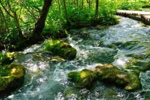 クロアチア 世界自然遺産 プリトヴィツェ湖群国立公園の写真素材 [FYI00065080]