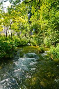 クロアチア 世界自然遺産 プリトヴィツェ湖群国立公園の写真素材 [FYI00065083]