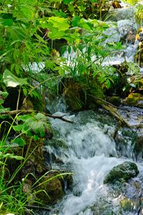 クロアチア 世界自然遺産 プリトヴィツェ湖群国立公園の写真素材 [FYI00065084]