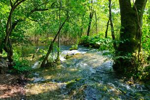 クロアチア 世界自然遺産 プリトヴィツェ湖群国立公園の写真素材 [FYI00065088]