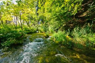 クロアチア 世界自然遺産 プリトヴィツェ湖群国立公園の写真素材 [FYI00065094]
