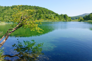 クロアチア 世界自然遺産 プリトヴィツェ湖群国立公園の写真素材 [FYI00065096]