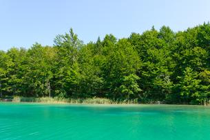 クロアチア 世界自然遺産 プリトヴィツェ湖群国立公園の写真素材 [FYI00065104]
