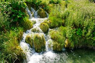 クロアチア 世界自然遺産 プリトヴィツェ湖群国立公園の写真素材 [FYI00065119]