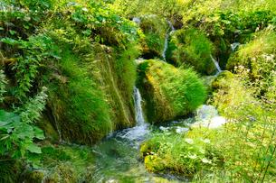 クロアチア 世界自然遺産 プリトヴィツェ湖群国立公園の写真素材 [FYI00065133]