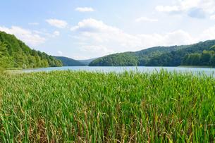 クロアチア 世界自然遺産 プリトヴィツェ湖群国立公園の写真素材 [FYI00065138]