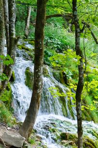 クロアチア 世界自然遺産 プリトヴィツェ湖群国立公園の写真素材 [FYI00065149]