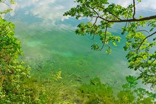 クロアチア 世界自然遺産 プリトヴィツェ湖群国立公園の写真素材 [FYI00065151]
