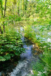 クロアチア 世界自然遺産 プリトヴィツェ湖群国立公園の写真素材 [FYI00065157]