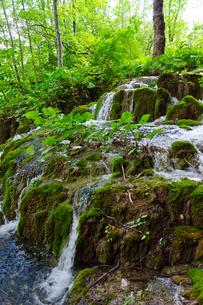 クロアチア 世界自然遺産 プリトヴィツェ湖群国立公園の写真素材 [FYI00065158]
