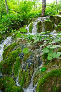 クロアチア 世界自然遺産 プリトヴィツェ湖群国立公園の写真素材 [FYI00065159]