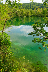 クロアチア 世界自然遺産 プリトヴィツェ湖群国立公園の写真素材 [FYI00065166]