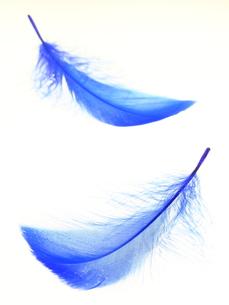 青い羽根の素材 [FYI00065349]