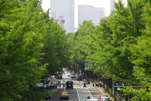緑の街の素材 [FYI00065531]