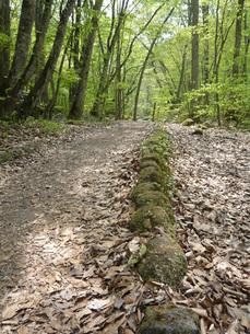 森の道−新緑の写真素材 [FYI00065570]