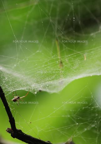 蜘蛛とクモの巣の素材 [FYI00065576]