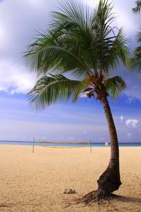 椰子の木の写真素材 [FYI00065796]