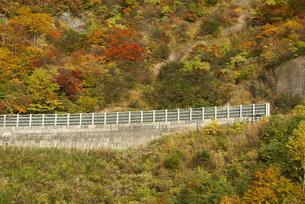 白山スーパー林道の紅葉の写真素材 [FYI00068291]