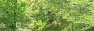 新緑の雑木林の写真素材 [FYI00068378]