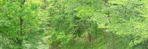 新緑の雑木林の写真素材 [FYI00068392]